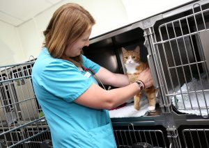Wilson Vet Group Staff Member Caring For Ginger Cat